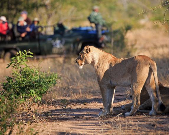 Ga eens op safari