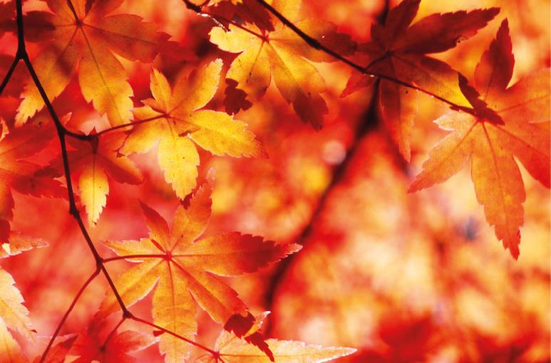 Bereid je voor op de herfst