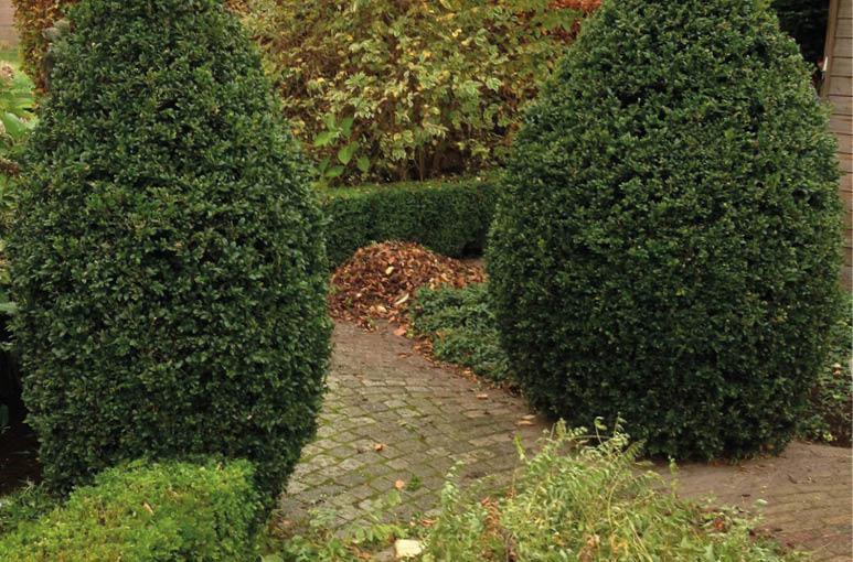 De zorg voor uw tuin is  bij ons in goede handen